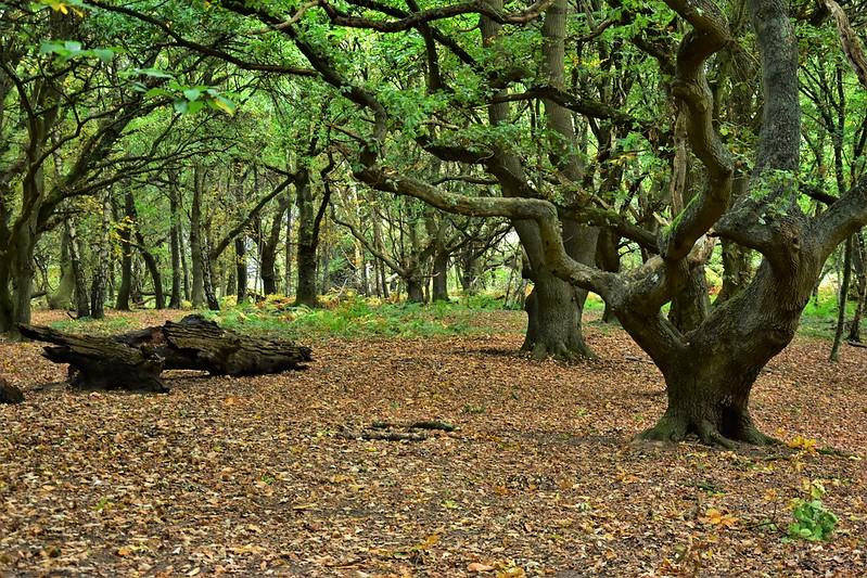 Woods - Visit Canterbury